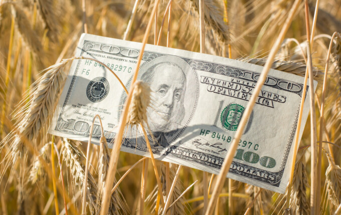 One hundred US dollar banknote in the field of ripe rye at sunset